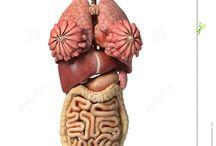 Drawing reference // Human anatomy