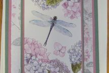 Cards...Dragonflies