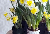 &Narcisse