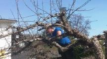 Beskjærer trær / Beskjæring av trær. http://www.brodrenekoteng.no/category/beskjaering/