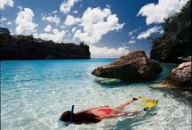 Explore the underwaterworld of Curaçao