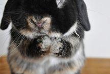 Easter Bunny Funny / Funny Easter Bunny Images