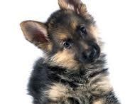 Puppys / by Bren Overly