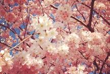 Spring pickings