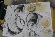 Natural forms: shells