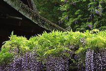 Plants - Southern Favorites
