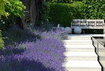 Växtlista Snäckhusträdgården
