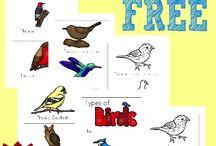 Birds, Butterfiles etc