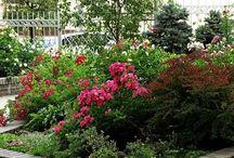 Сады и парки.
