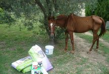 HORSE RESCUE / PLEASE DONATE TO OUR CAUSE  http://gogetfunding.com/project/ερανοσ-help-a-pony-help-with-equine-rescue WE NEED $100 MORE IN ORDER OUR FUNDRAISING PAGE TO BE VISIBLE TO DONORS THROUGH THIS WEBSITE. THEN WE HOPE TO GET THE HELP WE REALLY NEED.    THIS HORSE IS NOT ANY HORSE..HE HAS MAKE HISTORY AND HEDESERVES TO BE HONORED FOR HIS 27 YEARS NECT TO HUMANS. ITS PAYBACK TIME TO GIVE HIM THE HELP HE NOW NEEDS.  AND HOPEFULY HELP OTHER EQUINES IN NEED TOO.