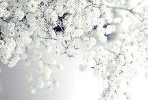 Biała beza