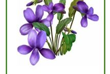 MŠ kvety