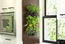 Green Wall / Vertical Gardening