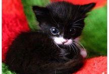 meow!!!