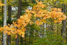 Autumn / by Jana Brownbear