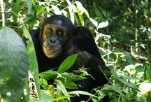 Reiseideen für Uganda / Touristisch bietet Uganda eine gute Infrastruktur abseits ausgetretener Touristenpfade. Lassen Sie sich verzaubern von wunderschönen Landschaften wie dem Weißen Nil mit seinen zahlreichen Wasserfällen, dem beeindruckenden Viktoria-See oder den Ruwenzori-Mondbergen, die mit ihren Gletschern, Flussläufen, Seen, Mooren und dichten Wäldern zu den schönsten Gebirgsregionen der Welt zählen. Die ASA Afrika Experten machen Ihre Reise nach Uganda zu einem unvergesslichen Erlebnis.
