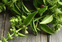 Inspiring Gardening Ideas