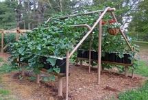 My Gardening Wishlist