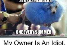 My owner is stupid