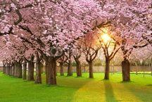 Dzień Dzikiej Flory, Fauny i Naturalnych Siedlisk