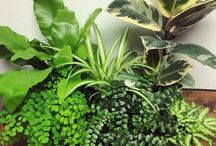 Indoor Plants and Decor