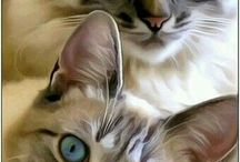 Nyt on nättejä kissoja