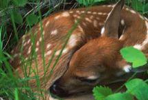 Cute Baby Deers