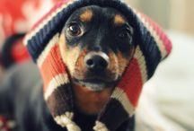 Pets / by Teena Liles
