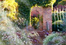 Garden space / by Bonnie Koenig