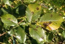 Krankheiten bei Pflanzen