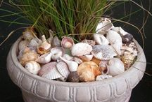 Shell and rock collection