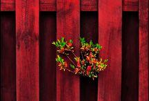 Fence inspiration