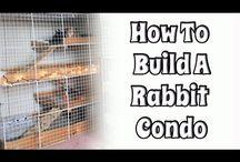 Rabbit condo