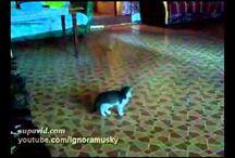 Krazy Kats in Motion......... / by Rosie Merrill