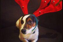 Christmasdog / Titoune
