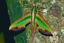 New Moths