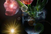 Fleurs/Nature & gifs