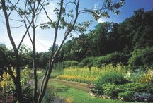 Plant Gardens / Our gardens have been biodynamic (Demeter Certified) for over 50 years.  We have approximately 4.5 hectares where we grow around 150 varieties of medicinal plants.   We still hand harvest very early in the morning when the plant's vitality is at its peak.