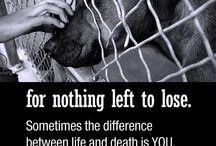 NOT TO ANIMAL CRUELTY!!!!! / Adopta, ayuda a detener el abuso y el maltrato animal!!!