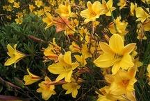 Zomerbloeiers / Breng een oase van kleuren aan in je tuin! #zomerbloeiers,