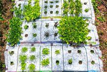 Growing vegetable seedlings