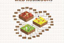 Health & Food Safety - Wild Mushrooms / Infographics etc