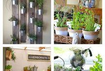 Indoar herb garden