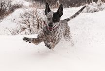 OH BOY! SNOW!! / Animals loving snow.