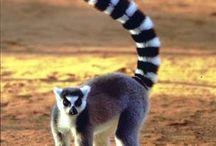 My memory of Madagascar