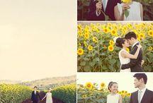 Sunflower Shoot