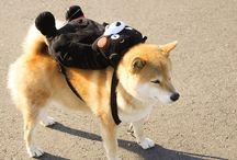 Piggyback ride    おんぶ