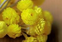 Flors&plantes