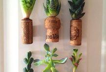 déco plante succulente