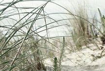 Beach life / by Julie Foster